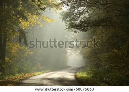 Autumnal forest on a foggy morning with the sunlight falling on a country road. - stock photo