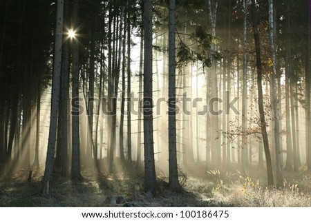 Autumnal forest on a foggy November morning. - stock photo