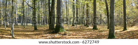 Autumnal forest panorama with dry leaves on ground
