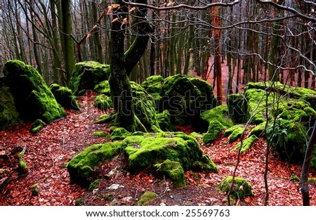 Autumnal forest with mossy rocks - stock photo