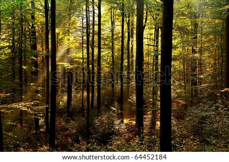 Autumnal forest with sunbeams - stock photo