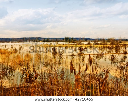 Autumnal golden lake - stock photo