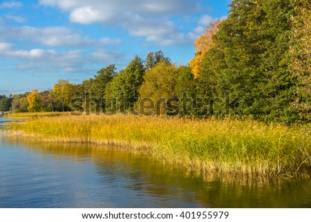 Autumnal lake coast with forest under blue sky. On shore of lake in autumn sunny day. Colorful fall foliage reflecting in surface of calm water. Beautiful Panoramic landscape with pine forest and lake - stock photo