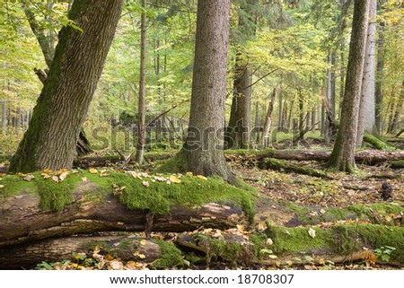Autumnal landscape of natural with lying dead tree and old trees in background - stock photo