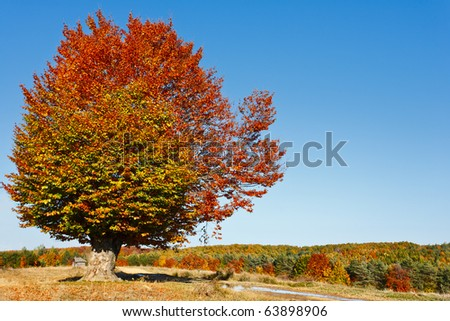 Autumnal landscape with a big beech tree in a sunny day - stock photo