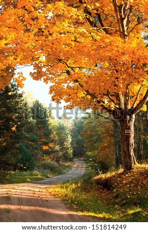 autumnal landscape with big tree or road in forest - stock photo
