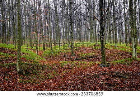 Autumnal landscape with deciduous forest and fallen leaves and green grass growing up from under them - stock photo