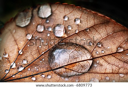 Autumnal leaf, macro shot, with dew drops - stock photo