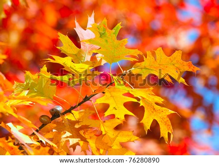 Autumnal leaves - stock photo