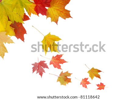 Autumnal leaves background - stock photo