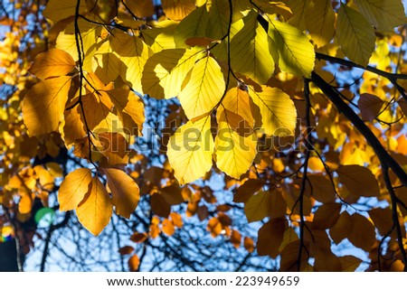 Autumnal leaves background in sunny day in the park - stock photo