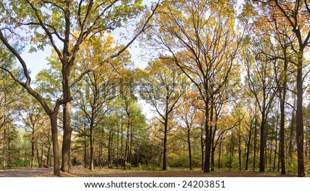 autumnal panorama, Indian summer with oaks, birches and dark pines - stock photo