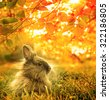 autumnal rabbit. Beautiful Art Design  background - stock photo