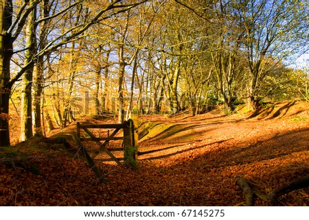 Autumnal scene at Hanchurch woods, Staffordshire - stock photo