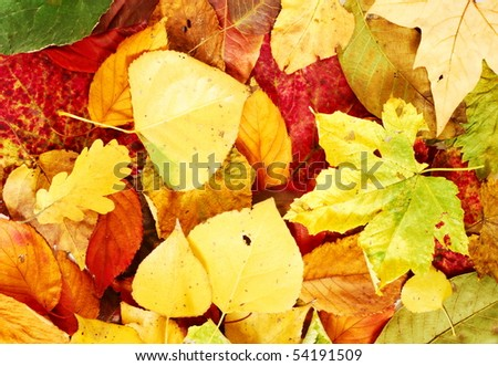 Autumnal texture with different types, shapes and colors of leaves
