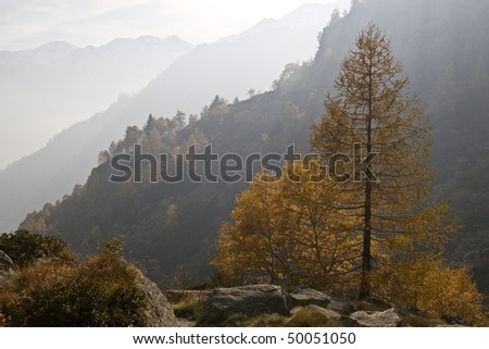 Autumnal tree in foggy day (Alps)