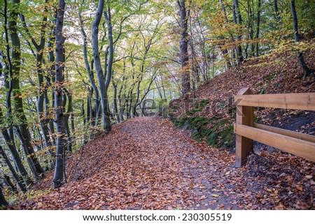 Autumnal trees on Kepa Redlowska cliff-like coastline in Gdynia, Poland - stock photo