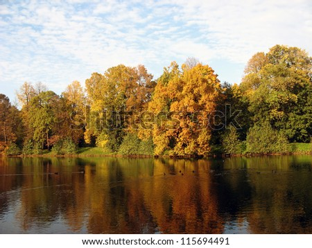 Autumnal trees on the river shore in sunny day