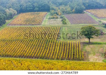autumnal vineyards, Burgundy, France - stock photo