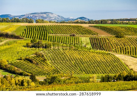 autumnal vineyards near Falkenstein, Lower Austria, Austria - stock photo