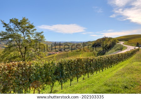Autumnal vineyards on the hills of Langhe under blue sky in Piedmont, Northern Italy. - stock photo
