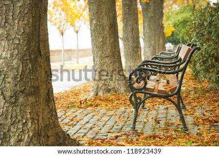 autumnal walkway with bench - stock photo