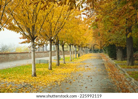 autumnal walkway with chestnut trees at Castle of Buda - stock photo