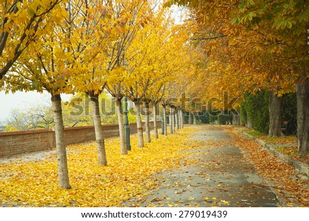 autumnal walkway with chestnut trees at Castle of Budapest - stock photo