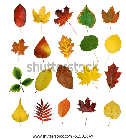 autumny leaves isolated - stock photo