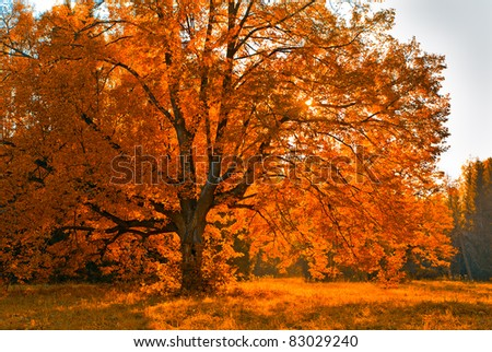 autunm tree - stock photo