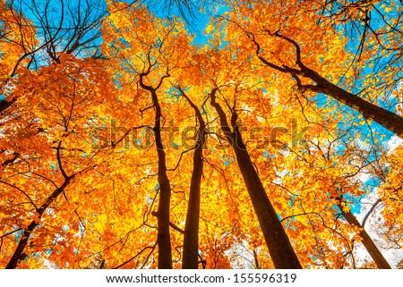autunm trees - stock photo