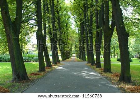 avenue in prak - stock photo