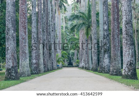 Avenue of royal palm trees at the Jardim Botanico botanic gardens Rio de Janeiro Brazil - stock photo