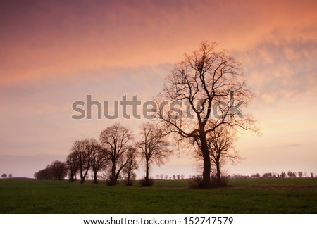 Avenue of trees at magical sunset with orange sky - stock photo