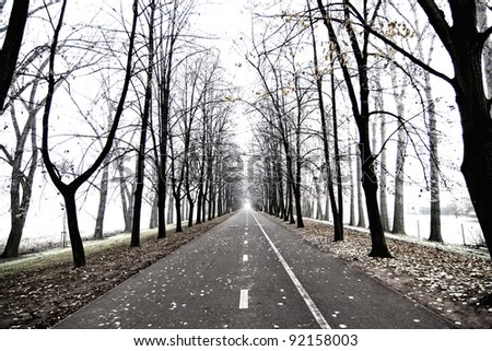 avenue of trees - vista