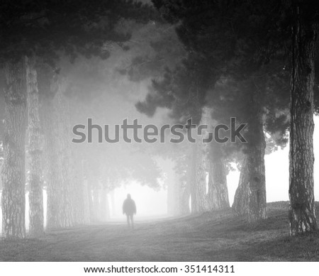 Avenue,with pine trees and fog,a man silhouette - stock photo