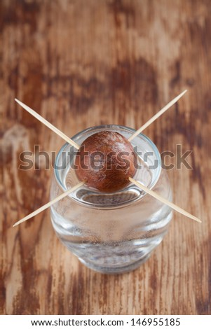 Avocado seed in glass with water �¢?? first growth stage of avocado plant - stock photo