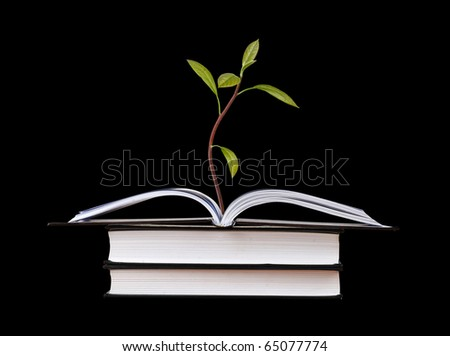 Avocado seedling growing from open book