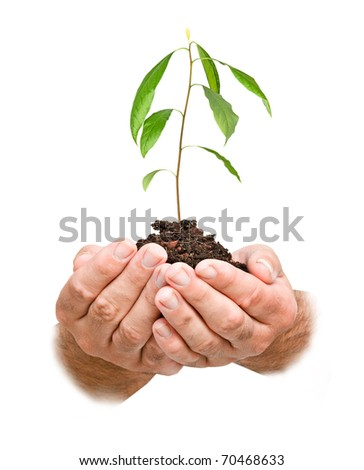 avocado tree seedling in hands as a symbol of nature protection