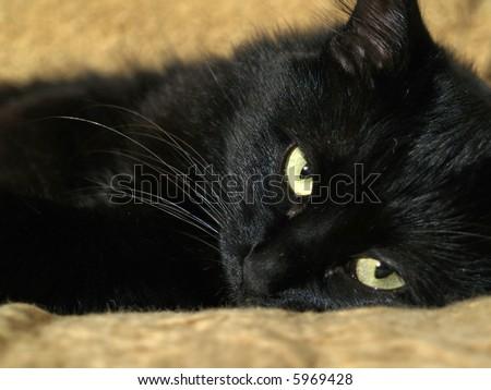 awake black cat on the sofa - stock photo