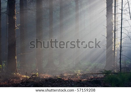 Awakening forest - stock photo