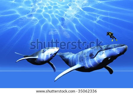 AWESOME - A diver encounters two Humpback whales in the ocean. - stock photo