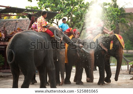 AYUTHAYA,THAILAND - APRIL 14,2016 :Group of elephants standing and unidentified mahout on a back.Were sprayed water on each other playfully at Wanchang Lae Phanait ,Ayutthaya Historical Park,Thailand.