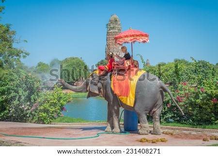 AYUTTHAYA - NOVEMBER 17, 2014:Elephant is stopping for drinking water at a scenic route taken during a visit to the historic site and behind the praram Temple on november 17,2014, Ayutthaya, Thailand. - stock photo