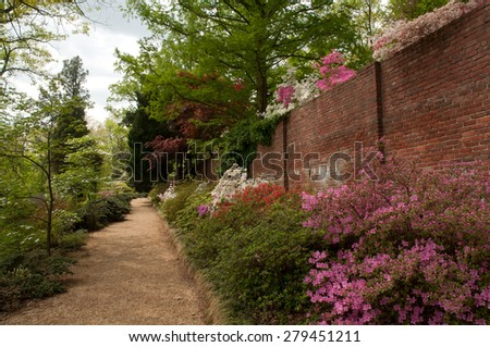 Azalea bushes along brick wall and on top of wall at National Arboretum in Washington, D.C. - stock photo