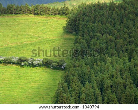 azores forest and fields