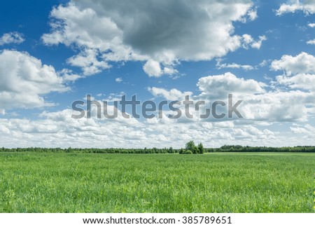 Azure cloudy sky above farm green oat and pea field - stock photo