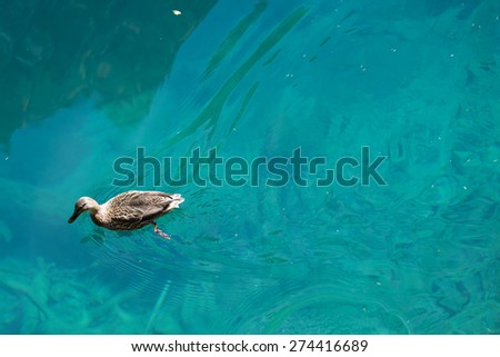 Azure lake with duck - stock photo