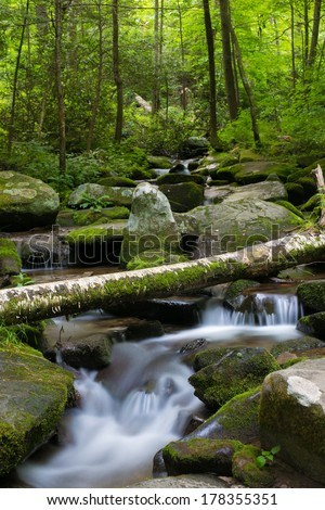 Babbling Brook in Green Forest With Fallen Tree - stock photo