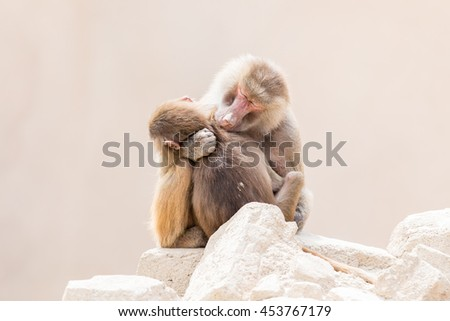Baboon mother and her little one, natural habitat - stock photo
